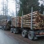 Metsa väljavedu 3