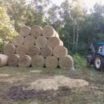 Põllumajandusteenused 9